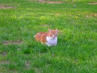 Enjoying the yard and the nice fresh air!