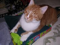 Hey! Get these presents out of the box so I can have it for a racecar!