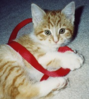 Another baby picture of Sam