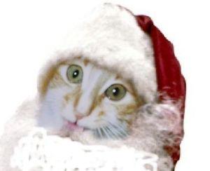 Me in a Santa Hat......