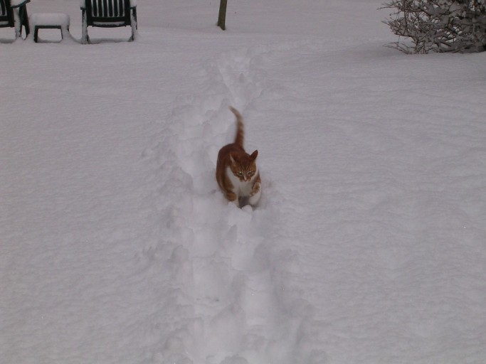 Sammy Following Mom's Path in The Snow