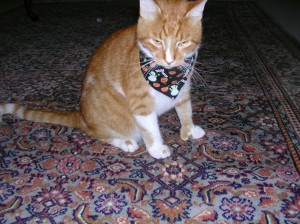 Sam Wearing His Halloween Scarf