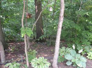 Backyard woods, trail, bench