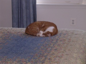 Sam napping in the guest room