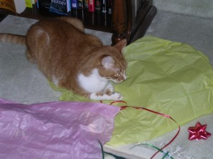 """Sam """"Helping"""" To Wrap Gifts"""
