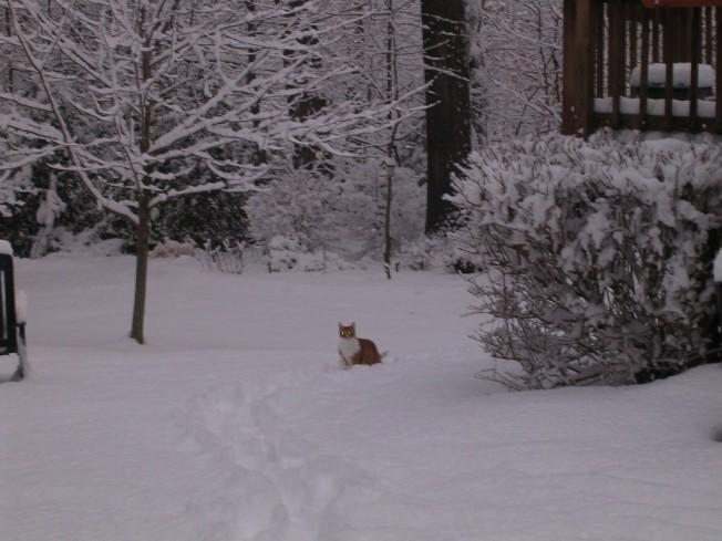 Sam in snow Winter 2010