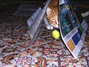 Sam's a fan of the Sunday newspaper.....
