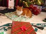 Sam on Christmas Morning