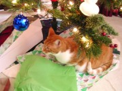 Sam Under Christmas Tree
