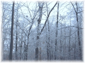 The woods covered in almost a half inch of ice