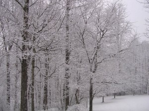 January 2012 Snow - another view