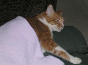 Sam Keeping Warm in a Blanket