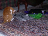 Sam loves newspaper and tissue - go figure!