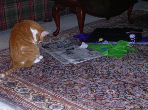Sam loves newspaper and tissue - go figure!