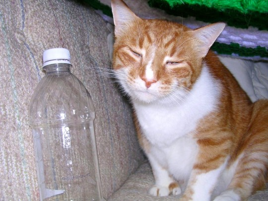 Too much bacon yesterday....I had to drink this WHOLE bottle of water because of the salt!  (burp)