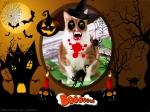 Sam's  Halloween Card