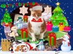 Sam's Overload ChristmasCard