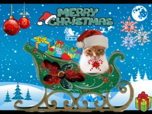Dashing thru the snow....in a one cat open sleigh....'ore the fields we go, meowing all the way!!!!