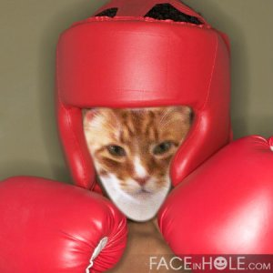 I'm ready to rumble!