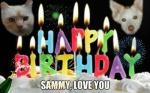 SammyFromMollie