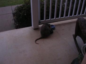 possum introoder