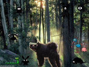 Zena knows the way to the woods campsite!  She's already run down to check it out - just follow her!!