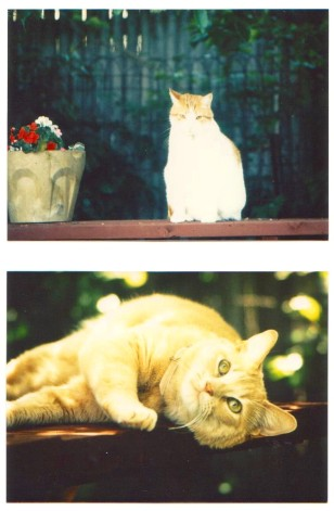 Ricky.....a sweet ginger boy who Mom had many years ago and bottom photo is his sister Linda Sue