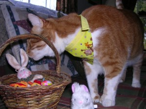 Gee I like this little wabbit in my basket - and doesn't my monkey bandan look nice????