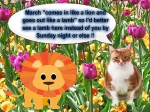 Sam Lion