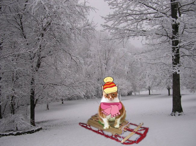 The weather dood says we might get snow this Wednesday......I'm gonna dust off my sled just in case!!