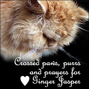 GingerJasper