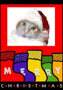 Baby Sammy Christmas card.....