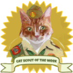 cat_scout_of_the_week_sammy_kimmel_cotw_1