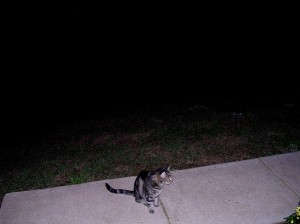 Stevie the feral visitor was out there waiting to join us to see the meteors.