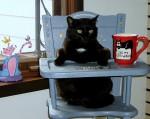 cat-high-chair