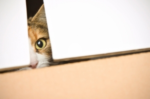 Curious cat peeking out of box