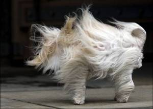 Now THIS is windy!