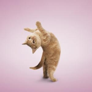 Stretch!!  Good morning world!!!