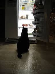 I don't know who this kitty is but I bet he's looking in there for HIS raspberry yogurt too!