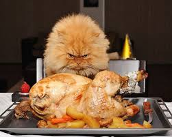 He doesn't look too happy about turkey on the menu!