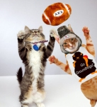 Me and one of the Kitten Bowl kitties tossing the ball!