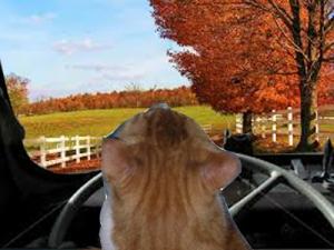 Yep - I'll be happy to drive you.......