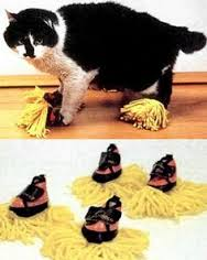 CLEANINGCATSHOES