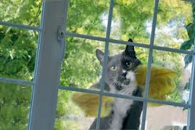 Yep - I'm your window man!