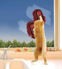 CLEANINGCATWINDOWS