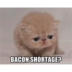 This guy can be as adorable as he wants but it won't get him to the head of the bacon line!