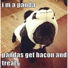 Don't ask me who made up this panda rule but I like it......and I'd even wear this ridiculous suit if I had to!