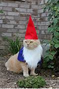 Our official Garden Gnome hard at work keeping PESTS out!
