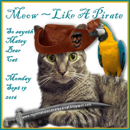 meow-likeapirateday-9_19_2016