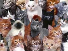 catbunch